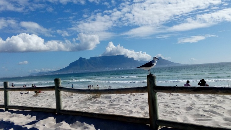 Room with a View - Table Mountain